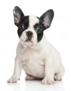 Croquettes Monge pour chien de petite taille